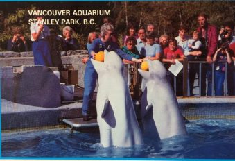 Beluga, postcard, aquarium, animal performance,